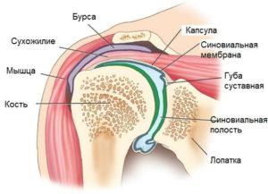строение плечевого бурсита