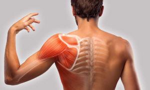 болят плечи профилактика