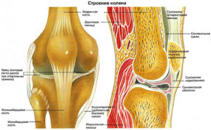 Почему хрустят колени? Диагностика, профилактика, лечение