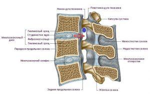о позвоночнике и остеохондрозе